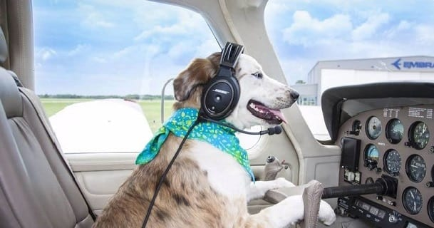 Pilots and Paws Dog Rescue